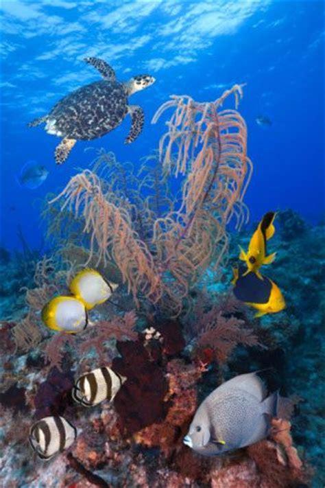 Galapagos Island Underwater