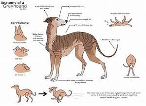 Greyhound Knowledge Forum