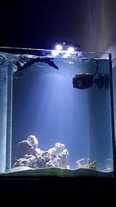 Optimale Aquarium Temperatur : an ideal seahorse aquarium reef2reef saltwater and reef aquarium forum ~ Yasmunasinghe.com Haus und Dekorationen