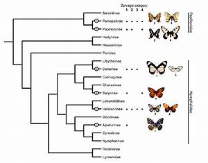 The Occurrence Of The Sphragis In Butterfly Subfamilies  Dark Circles