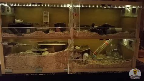 meuble cuisine d été meuble kallax transformé en une cage à gerbilles