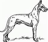 Coloring Realistic Dog sketch template