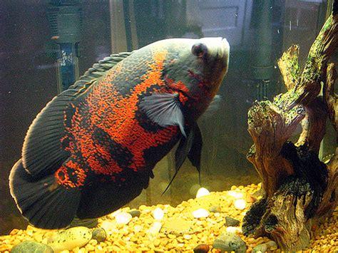 freshwater fish talk
