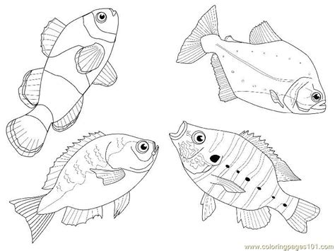 fishes  views coloring page   fish