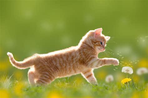 das richtige futter fuer kitten und junge katzen rinderohrde