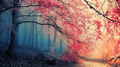 Pink Trees Forest Desktop Wallpapers Backgrounds Mobile