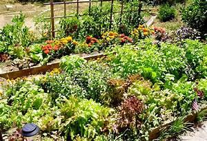 Garden blog how to plant a vegetable garden for How to plant vegetable garden