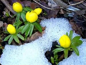 Was Sind Frühlingsblumen : walters weblog ~ Whattoseeinmadrid.com Haus und Dekorationen