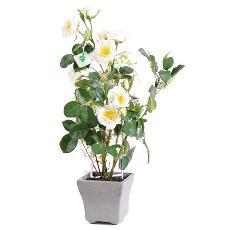 rosier retombant en pot 28 images rosier miniature gamme parade 174 pot diam 232 tre 10 5 cm