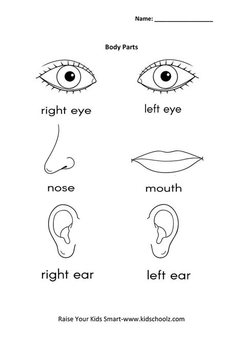 worksheet   human eye structure  function