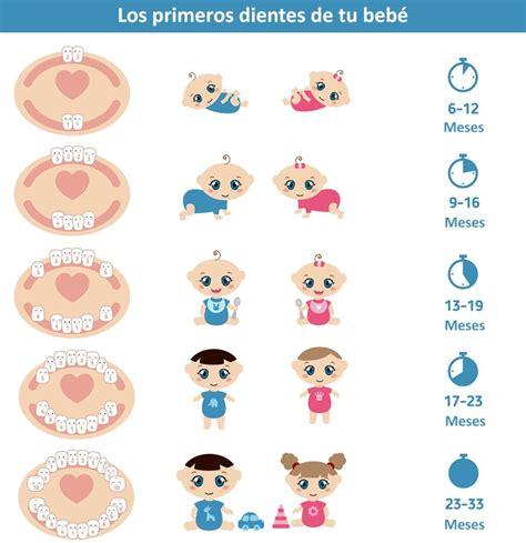 los primeros dientes de tu bebe child care bebe