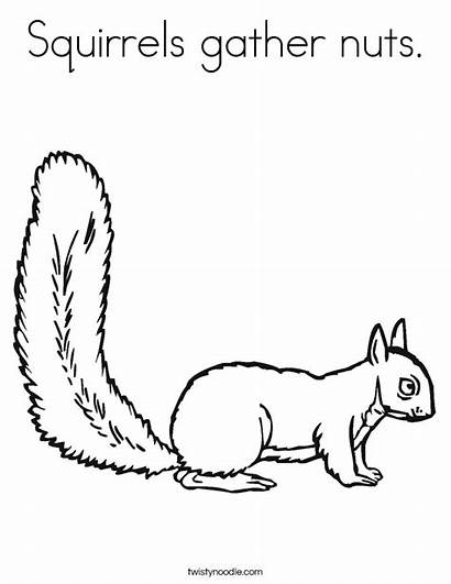 Printable Squirrels Squirrel Coloring Pages Nuts Gather