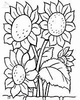 Coloring Sunflower Plants Lovely Sky sketch template