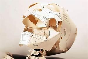 Build Your Own Human Skeleton  U2013 I Need It
