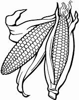 Corn Coloring Pages Ear Cob Drawing Printable Getcolorings Indian Template Vegetables Farm Animal Fall Unique Stalk Getdrawings Vegetable sketch template
