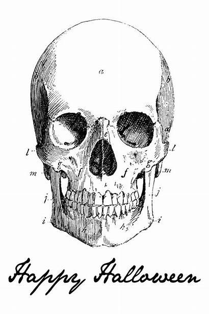 Halloween Printable Happy Prints Skull Wreath Skeleton