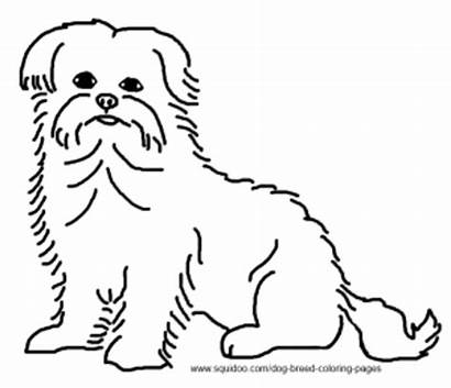 Coloring Maltese Pages Dog Terrier Breed