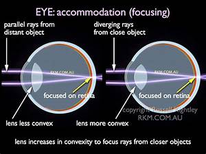Video Animation  Eye  Accommodation Or Focusing  Emmetropic Or Normal Eye  By Russell Kightley Media
