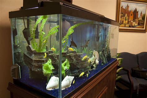 aquarium designer fish tank and fish aquarium design installations and maintenance for sarasota and bradenton