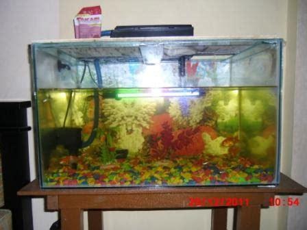 catatanku membuat aquarium murah meriah
