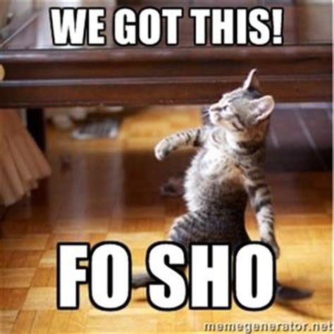 We Got This Meme - we got this fo sho walking cat memes pinterest