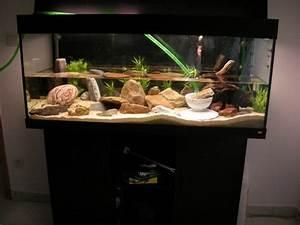 Idee Decoration Aquarium : photo d coration aquarium juwel ~ Melissatoandfro.com Idées de Décoration