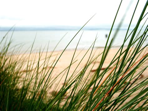 Beach Grass Images  Reverse Search