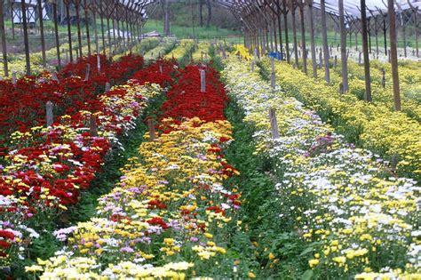 siguatepeque se prepara  el festival de las flores