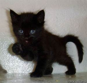 Pictures Of Cute Black Cats | www.imgkid.com - The Image ...