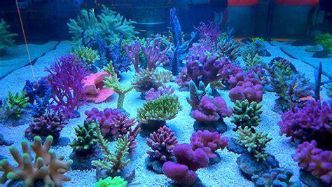 divers interzoo 2014 aquarium r 233 cifal aquarium marin aquarium eau de mer reefguardian