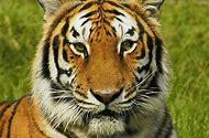 Wildlife Wild Animal Pictures