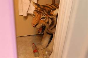 Party with the wolfpack at the 39the hangover experience for The hangover tiger in the bathroom