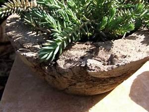 Pflanztröge Selber Machen : topf garten selbst gemachte pflanztr ge aus beton meriseimorion ~ Sanjose-hotels-ca.com Haus und Dekorationen