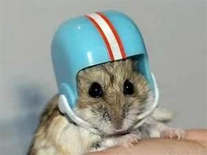 Cute Hamsters - YouTube
