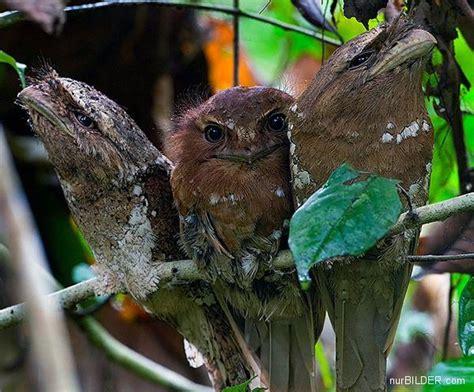 einheimische vögel bilder voegel seltsame v 246 gel die besten 100 bilder in vielen kategorien