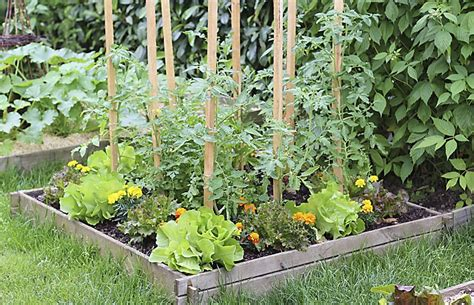 Tips And Tricks For Planting A Vegetable Garden This