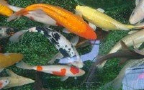 amenagement bassin poissons ext 233 rieur