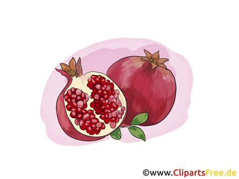 granatapfel illustration bild clipart kostenlos