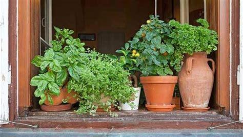 indoor herbs better than houseplants earth news