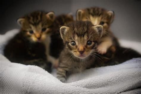 Newborn Kitten Care  Caring For Newly Born Kittens