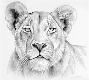 Drawing of a lioness | Drawings And Paintings | Pinterest ...