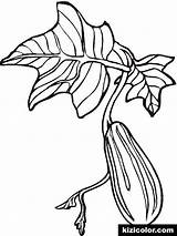 Cucumber Coloring Pages Printable Vegetables Turnip Popular Getcolorings Recommended sketch template