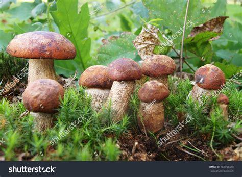 Pilze Im Rasen Kalken by Mittel Gegen Pilze Im Rasen Unkraut Im Rasen Vernichten