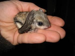 bébé-ecureuil-volant / Autour d'un café