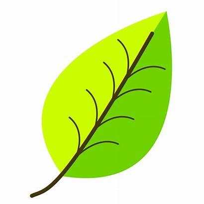 Leaf Leaves Clipart Drawing Transparent Clip Venation