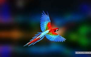 Colorful Parrot Desktop Wallpapers   Free Wallpapers