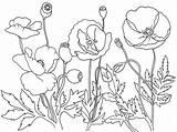 Poppies Coloring Remembrance Poppy Flower Garden Field Template Colouring Memorial Kolorowanki Maki Bestcoloringpagesforkids Adult Sketch Dzieci Dla Sheets Anzac Flanders sketch template