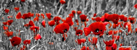 poppy images free remembrance remembrance bailey gwynne and poppies