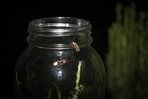 Catching lightning bugs in a jar