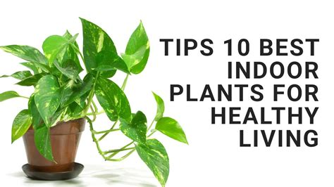 Tips 10 Best Indoor Plants For Healthy Living Youtube